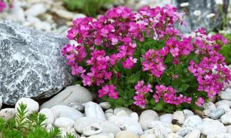 Amenajarea grădinii cu piatra decorativă granulată sau rotunjită