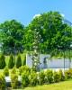 Arcadă metalică, pergolă grădină pt. trandafiri