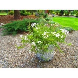 Jardinieră gabion cilindric L