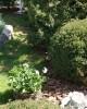 Scoarță de pin rotunjită